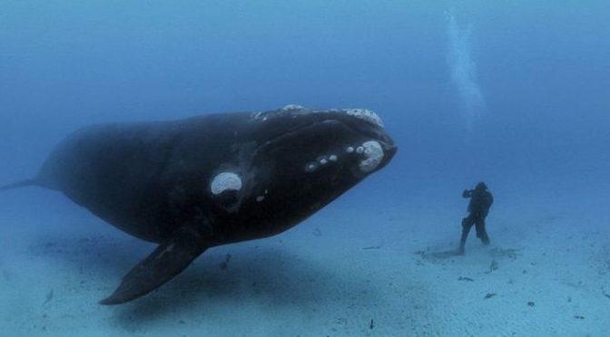 Poster «Rencontre avec une baleine»
